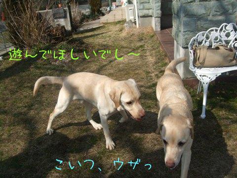 2010_02225gatu0003.jpg