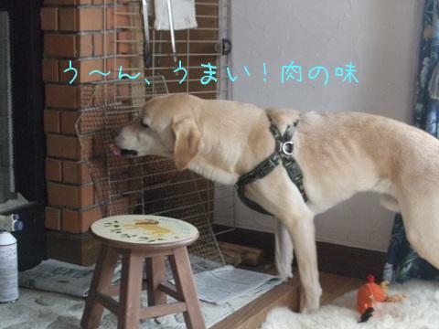 2010_02225gatu0015.jpg