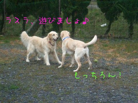 2010_03055gatu0010.jpg