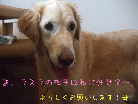 2010_03055gatu0013.jpg