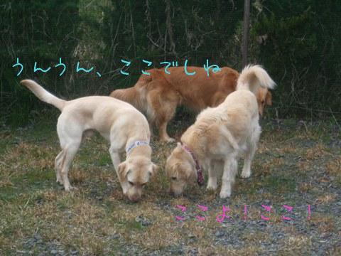 2010_03225gatu0056.jpg