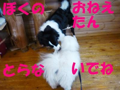 taro100232_convert_20100216192642.jpg