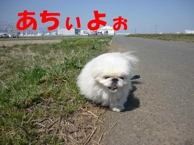taro100310_convert_20100314193530.jpg