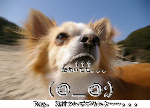 10-02 雑賀崎 6