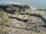 地震直後の地面のヒビ割れ4