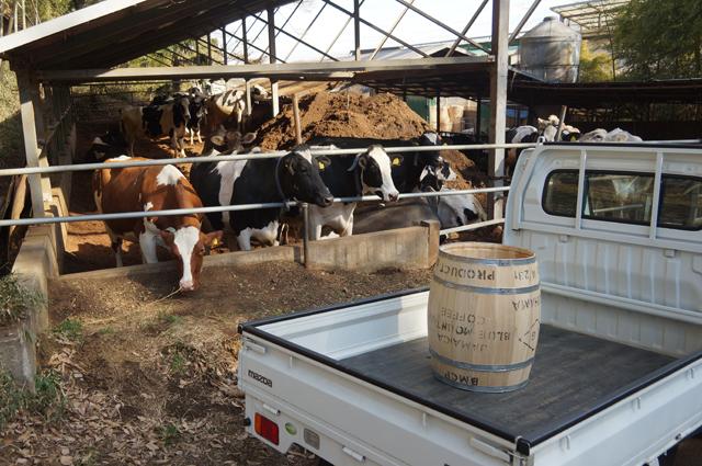 磯沼牧場でもらった、樽