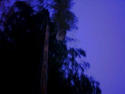 夕闇の裸電球の街灯・笠松電機製251と91