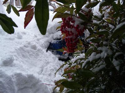 雪に埋もれた、マツダアクセラスポーツ