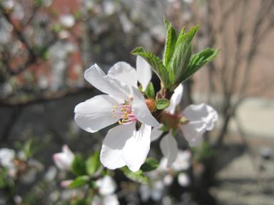桜が咲いてました~♪