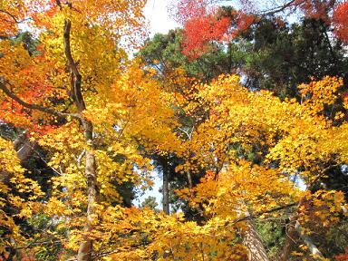 黄葉も綺麗~(≧▽≦)♪