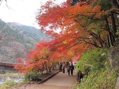 紅葉のトンネル~♪
