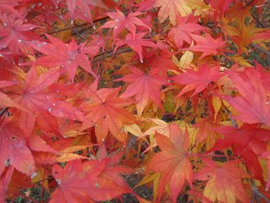 紅葉の絨毯♪
