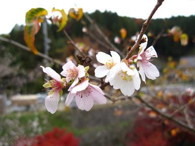 桜だぁ~(〃▽〃)きゃ♪