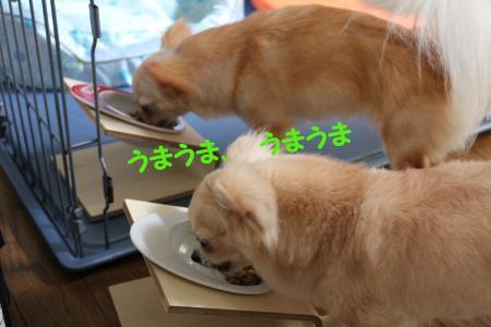 B0630b_convert_20100630185944.jpg