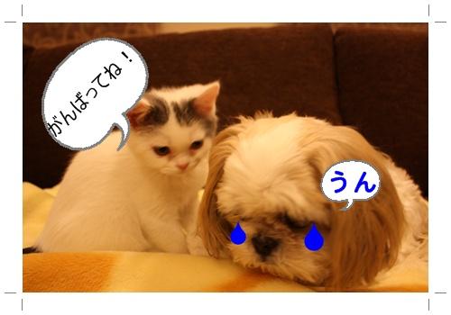 2010_02_14_0066ど