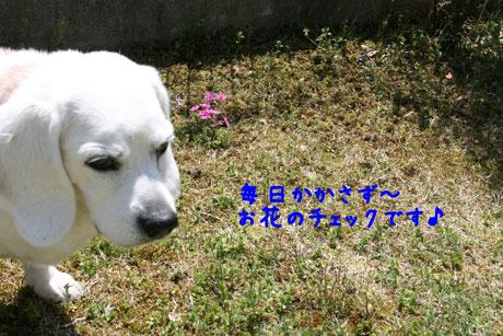 1_20110412170956.jpg