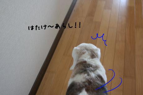 1_20110505173853.jpg