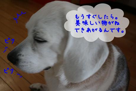 2_20110401132529.jpg