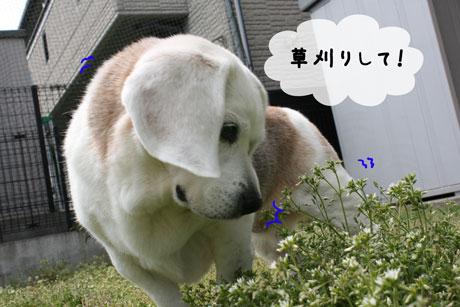 2_20110417140939.jpg