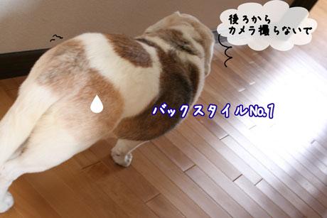 2_20110418140653.jpg