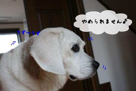 2_20110505173853.jpg