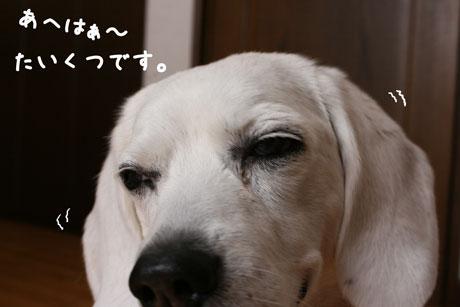 2_20110507151519.jpg