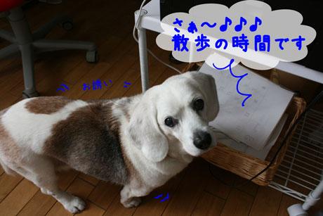 3_20110331151449.jpg