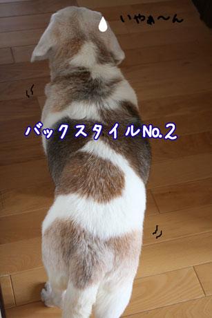 3_20110418140653.jpg