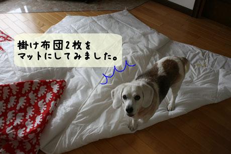 4_20110502134749.jpg