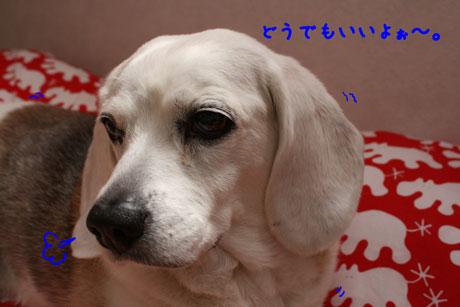 4_20110506135207.jpg