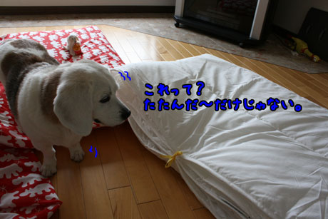 5_20110502134749.jpg