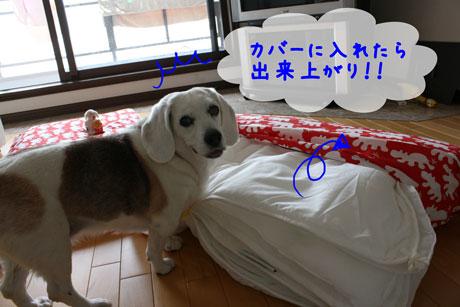 7_20110502134814.jpg