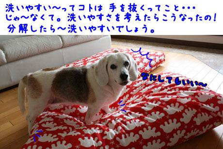 8_20110502134814.jpg