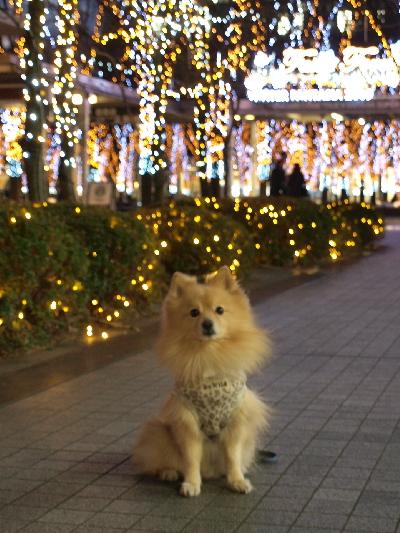 ケヤキ広場で