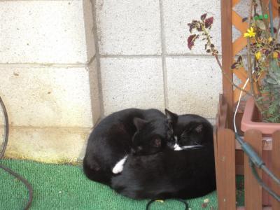 ソックスとクータ猫団子
