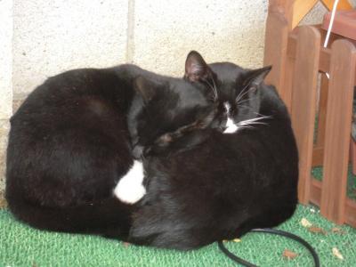 ソックスとクータの猫団子アップ