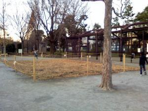 12月15日の中庭