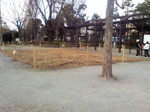 12月19日の中庭