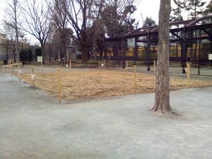 12月26日の中庭