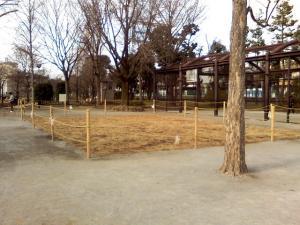 1月3日の中庭