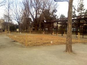 1月4日の中庭