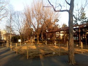 1月5日の中庭