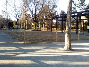 1月10日の中庭