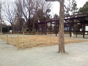 1月11日の中庭