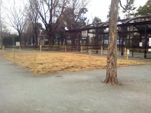 1月12日の中庭
