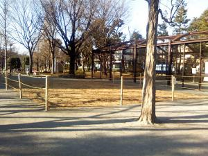 1月13日の中庭