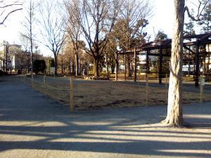 1月14日の中庭