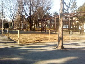1月15日の中庭
