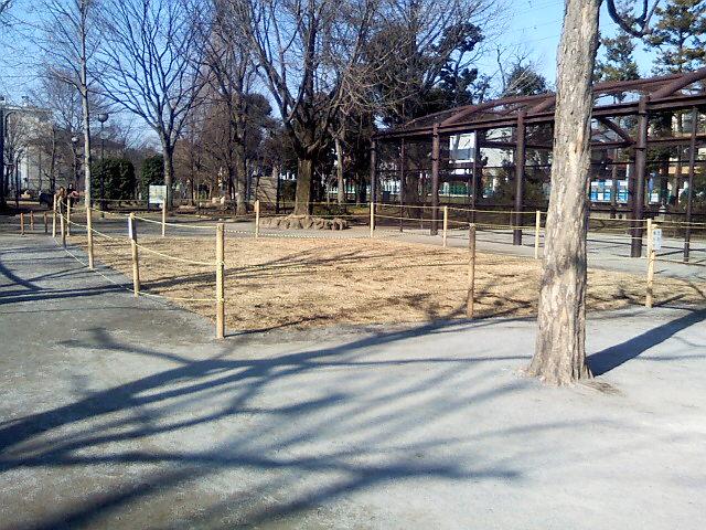 1月18日の中庭