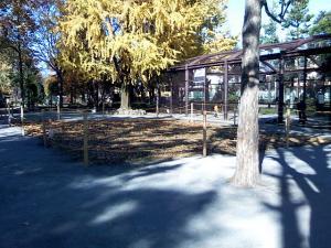 11月23日の中庭